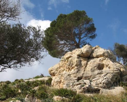 WellSpa Reise Mallorca Baum
