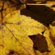 Wellness Herbst
