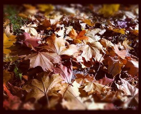 WellSpa-Portal Herbst Blätter