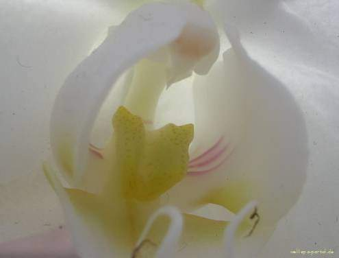 WellSpa-Portal weiße Orchidee