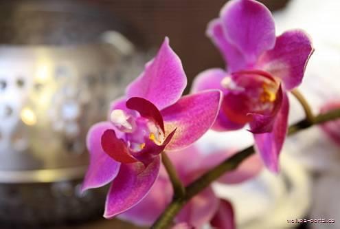 Orchidee als Sinnbild für Schönheit