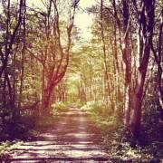 Wellnesstrend Wandern