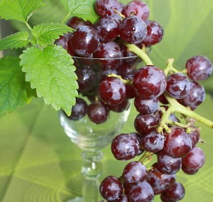 WellSpaPortal Wein Wellness