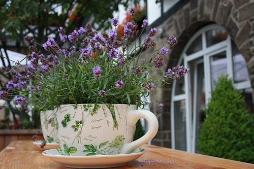 WellSpa-Portal Lavendel Kräuterkosmetik