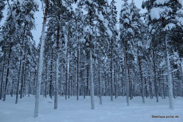 Finnland Lappland