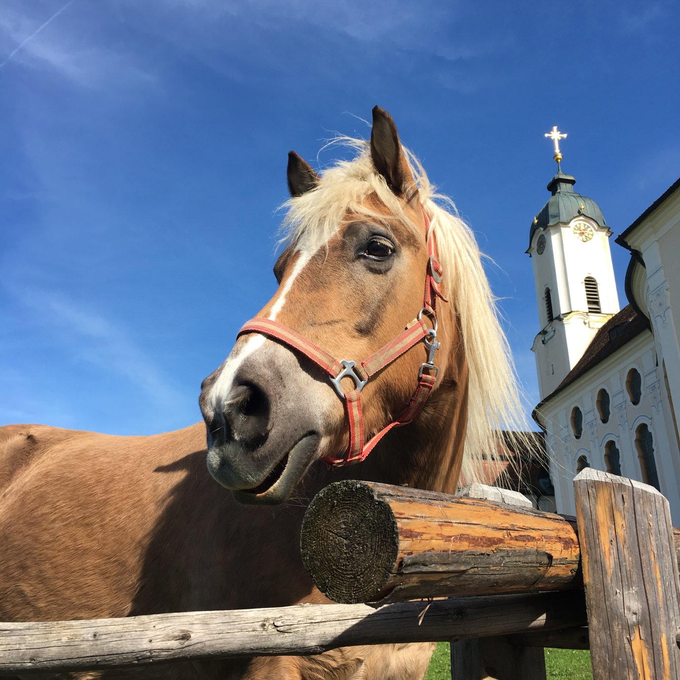 Genussreisetipps Allgäu Wieskirche
