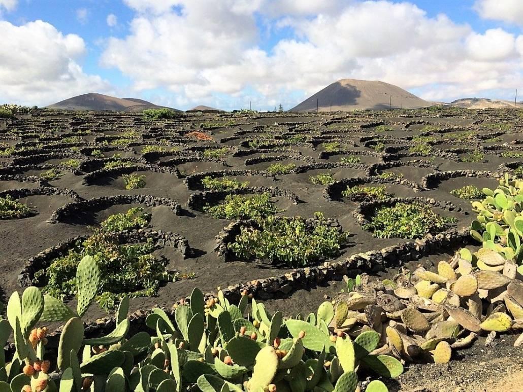 Genussreisetipps auf Lanzarote. Die nördliche Kanarische Insel bietet eine Vielzahl an tollen Möglichkeiten eine Reise zu genießen. Auszeit am Strand, Entspannung am Meer, Ruhe mit Kultur. Lanzarote geprägt von Architekt Cesar Manrique. Weinanbau auf Lanzarote, anders als auf dem Festland in Spanien