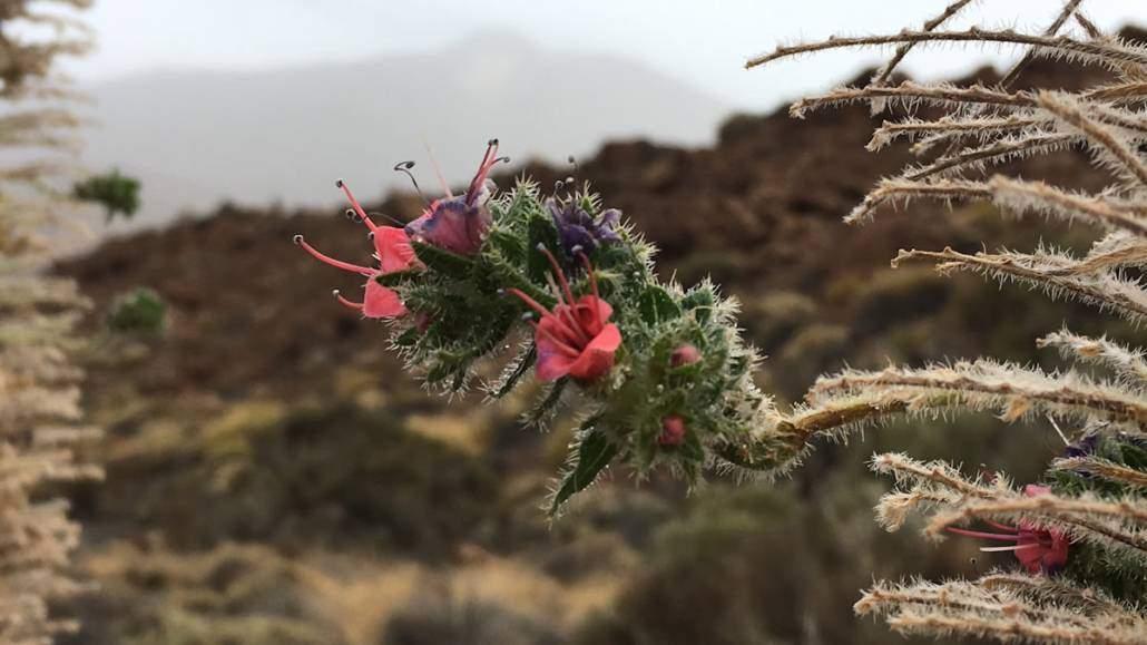 Wandern, Genuss und Wellnessurlaub auf Teneriffa