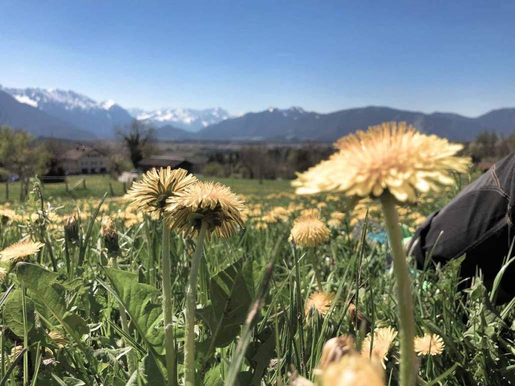 Urlaub für Allergiker bedeutet allergikerfreundlicher Urlaubsorte