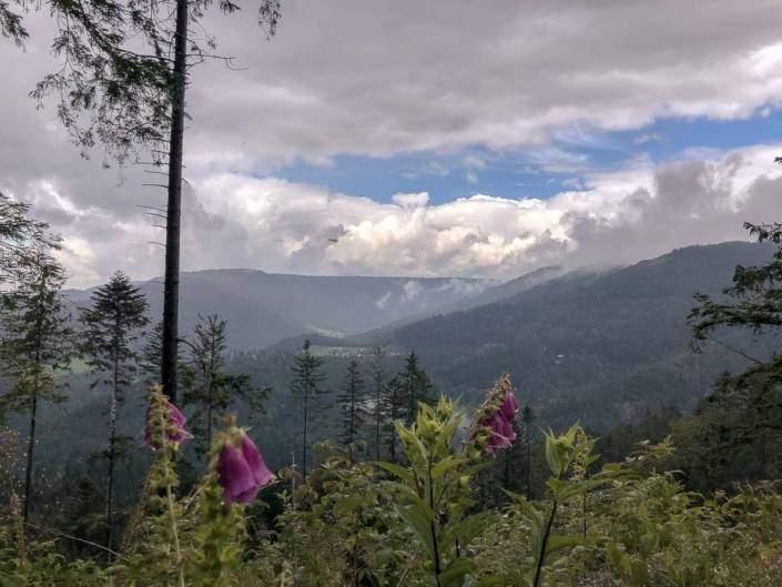 Genussvoller Wanderurlaub im Schwarzwald - WellSpa-Portal