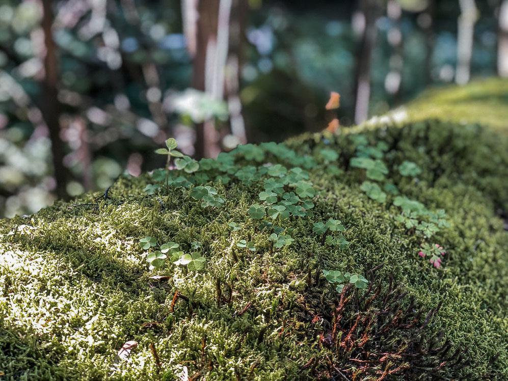 Waldbaden - Auszeit vor der Haustüre in der Natur - WellSpa-Portal